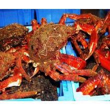 Vaya centollas . Son gallegas y las puedes encontrar en www.elmejorpescado.net