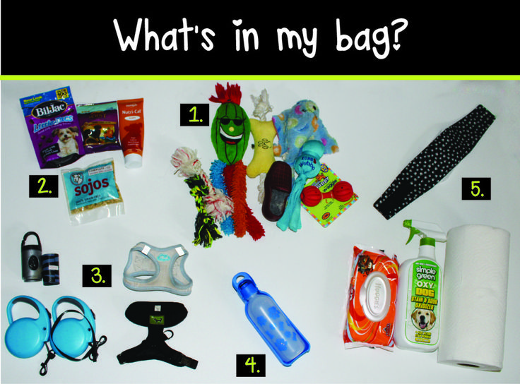 Traveling with dogs? Do you know what to bring? Check out this packing list!  |  via www.ebeesworld.com