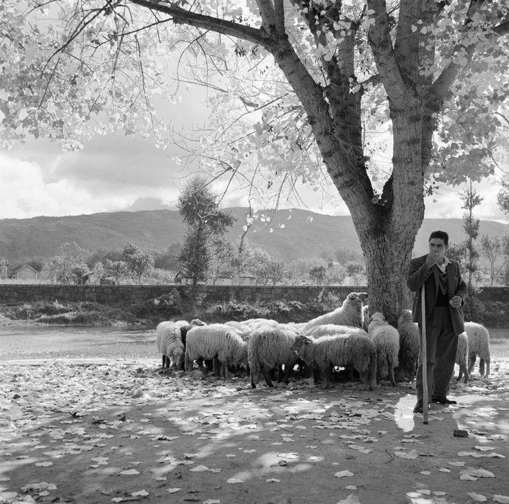 Chaves, década de 50/60. Artur Pastor : Fotografia [churra badana?] Portugal