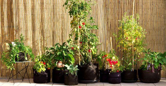 Faire un potager sur son balcon : les conseils d'un pro et son matériel