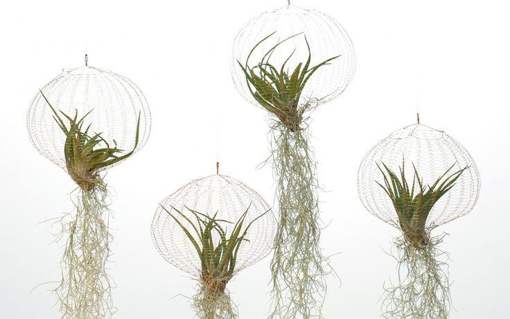 air-planting-carolijn-slottje-11-e1444989646469-1240×775