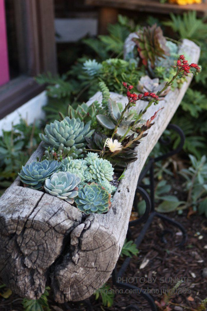 24 Cheap Planter Ideas for Amazing Succulent Garden