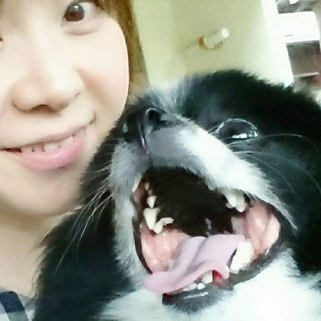 ジロウの名言「一緒なら頑張れる」 · おはようございます。 · 今日は区切りの良い100投稿目。 · 皆さんとの繋がりで、 ワンコを飼う楽しみを知り ジロウがいる幸せを実感しています。 · #空前絶後の癒し男 #我こそはジロウ #イエーイ · #今日の一枚#パーティーカラーポメラニアン#愛犬 #写真#撮影#白黒#投稿#一緒#元気#犬のいる暮らし #暑さはスタートしたばかり皆さま体調に気をつけて #pomeranian#partycolor#blackwhitedogs#pet#pom #instadogs#dogstagram##pomestgram#lovely#pic
