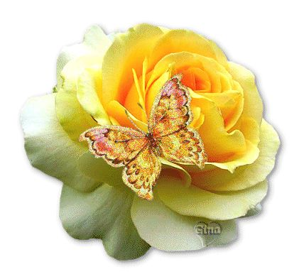 flowers animation images | Butterfly On Yellow Rose Animated Picture | All Flowers | Send Flowers ...