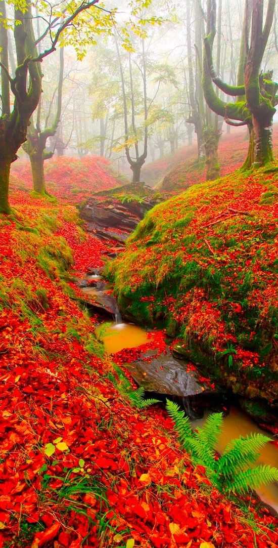 Forest of fall colors, Beautiful Beech in Gorbea, Basque Country, Spain