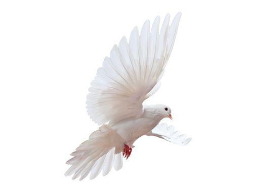 Kadınlar Günü'nde Özgürlüğe Uçan İki Beyaz Güvercin  #surpriz #kadinlargunu