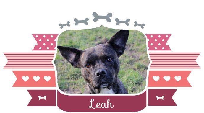 Leah zoekt een baasje! Leah heeft ietsje langer de tijd nodig om je te leren kennen, maar wanneer ze om is, dan is ze ook echt om! Ze is gek op knuffelen en gezelligheid. Ook is Leah heel erg speels. Al je een tak voor haar weg gooit, dan gaat ze daar met grote bokkensprongen achteraan! Leah kan goed met andere honden omgaan. Leah is geschat op ongeveer 4 jaar. Ga naar onze blog om meer over dit asielhondje te weten te komen: www.teamconfetti.nl