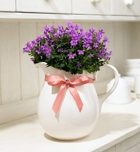 Campanula Jug - a lovely gift idea #flowers #gifts