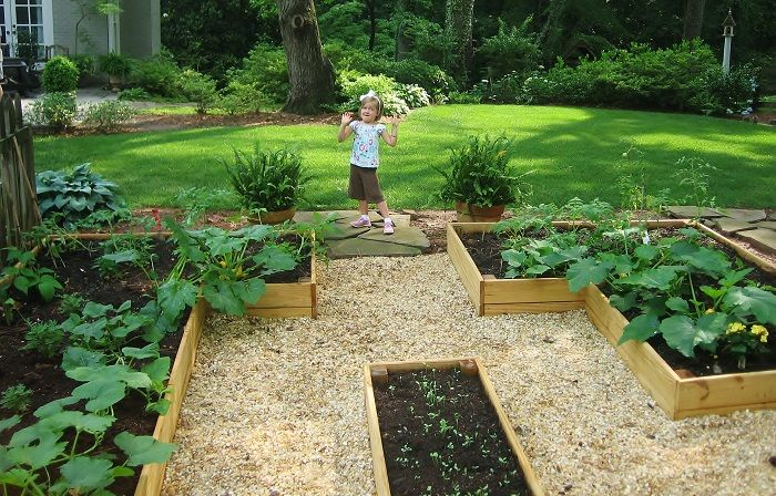 Advantages And Disadvantages Of Raised Garden Beds