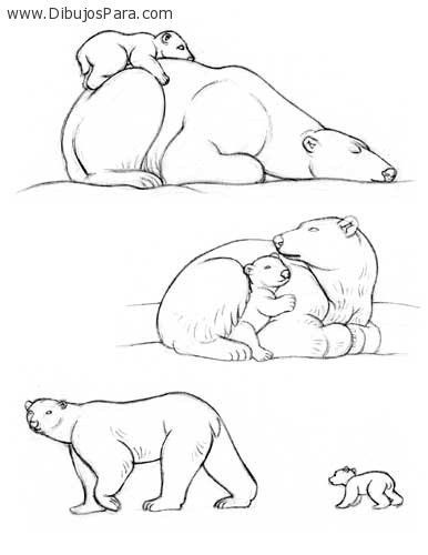 Dibujo de osos polares