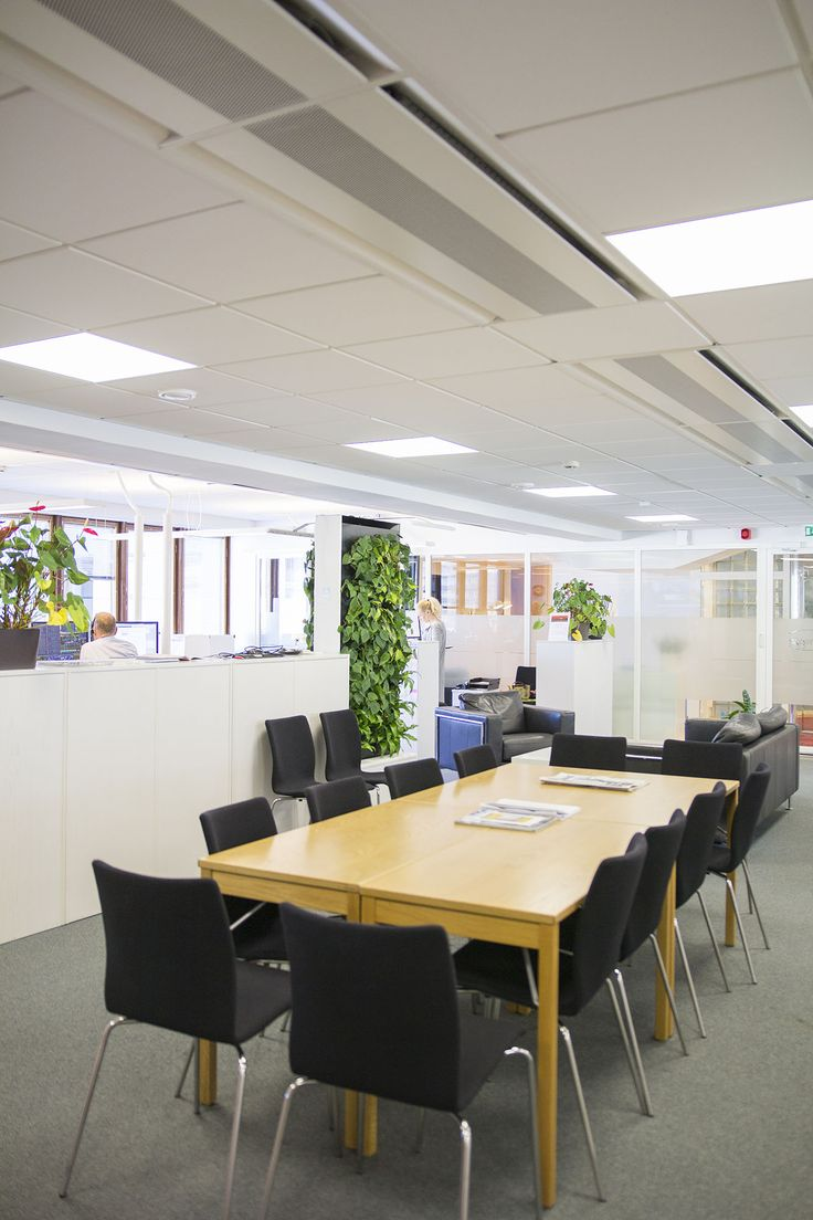 Naava Duo smart green wall in Carnegie office