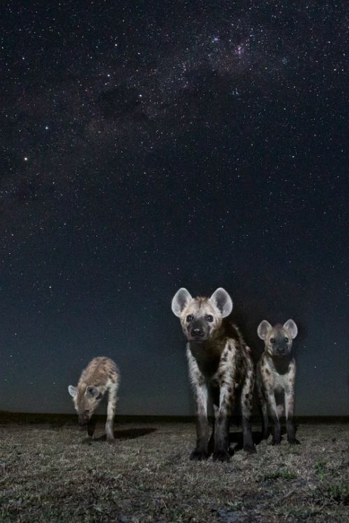 tulipnight: Spirits of the Night byWill Burrard-Lucas