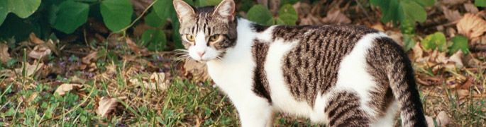 Alley Cat Allies - dedicated to transforming and developing communities to protect and improve the lives of cats.