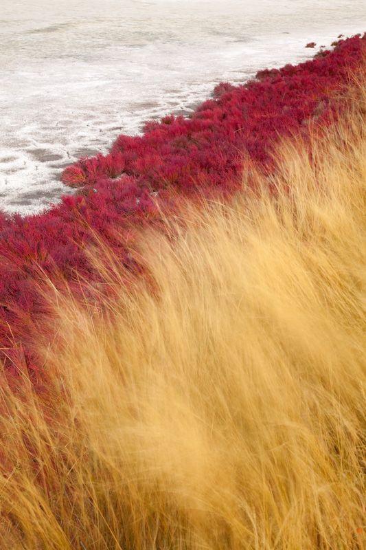 Dried Lake and Grasses, Kamloops, British Columbia, Canada | Don Paulson