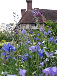 My favorite colour in the garden, and my favorite workhorse, the campanula. Great Dixter