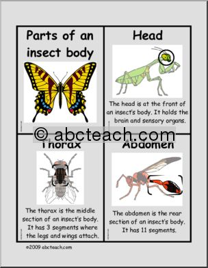 ice insect diagram firefly insect diagram 1000 images about projects to try on pinterest crafts
