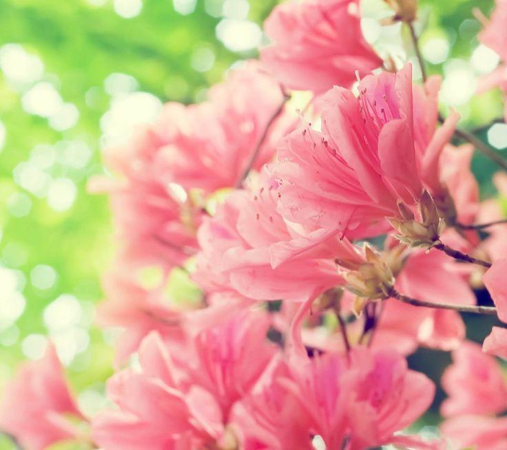 flower wallpaper for facebook profile flowers