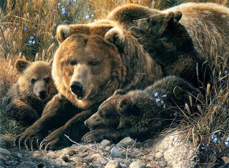 «Тайная жизнь животных» | Carl Brenders. Обсуждение на LiveInternet - Российский Сервис Онлайн-Дневников