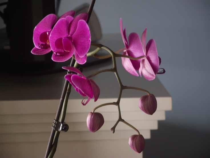 No.9 Jan 2013 bloom #orchids