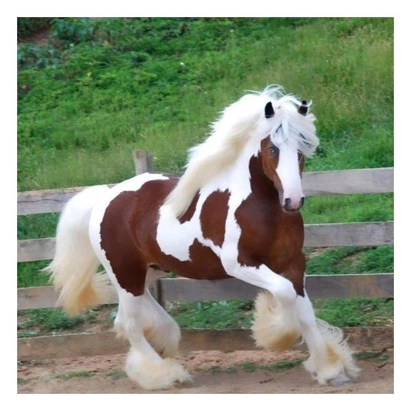 Horses ❤ liked on Polyvore featuring animals, horses, pferde and pictures