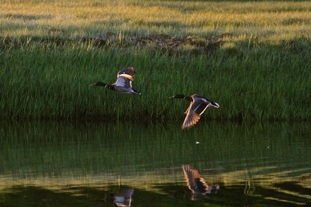 Reflection Photo by Dana C Spires — National Geographic Your Shot
