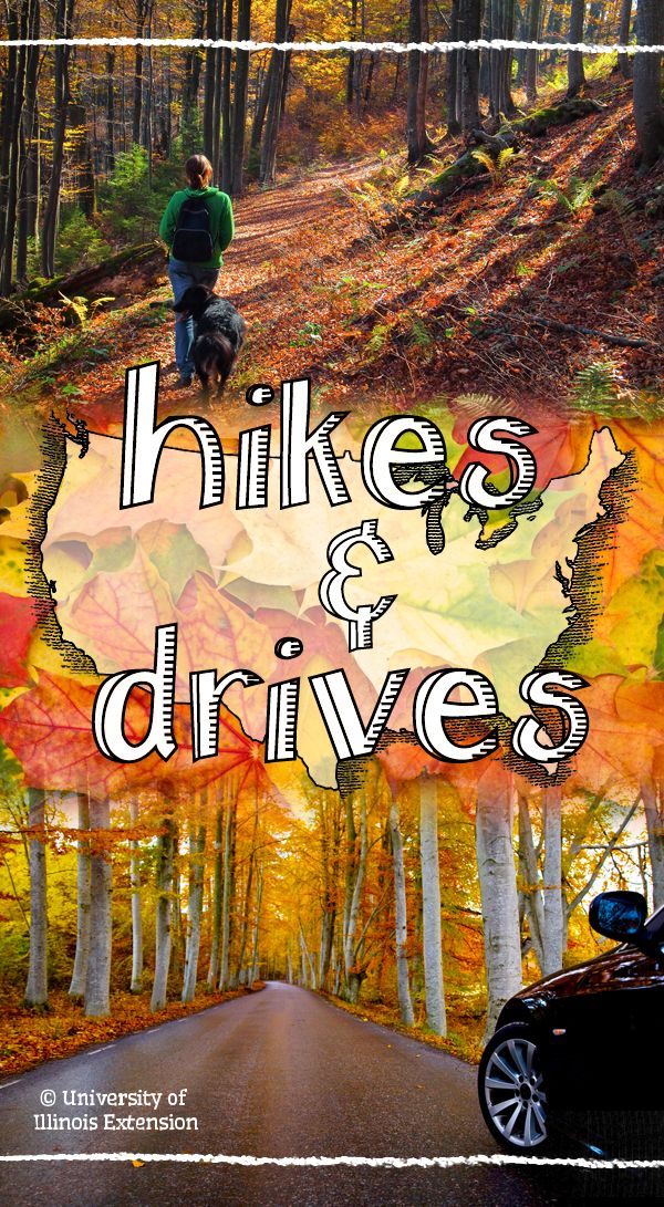 Scenic Hikes & Drives for Fall!