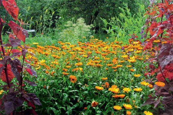 Ekozahrada a zázračné bylinky