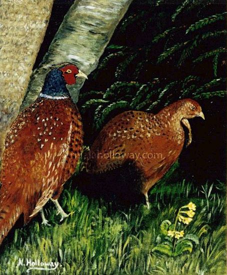 """Mating Pheasants"" by Nuala Holloway - Acrylic on Board www.nualaholloway.com #Pheasants #Wildlife #IrishArt #NualaHolloway"