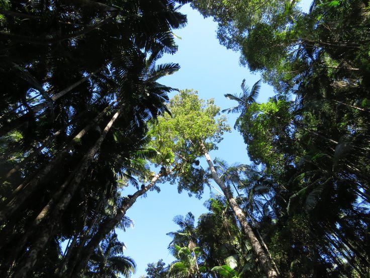 Minyon Rainforest short walk