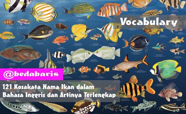 Kosakata Nama Ikan dalam Bahasa Inggris dan Artinya Terlengkap   http://www.belajardasarbahasainggris.com/2017/04/19/kosakata-nama-ikan-dalam-bahasa-inggris-dan-artinya-terlengkap/