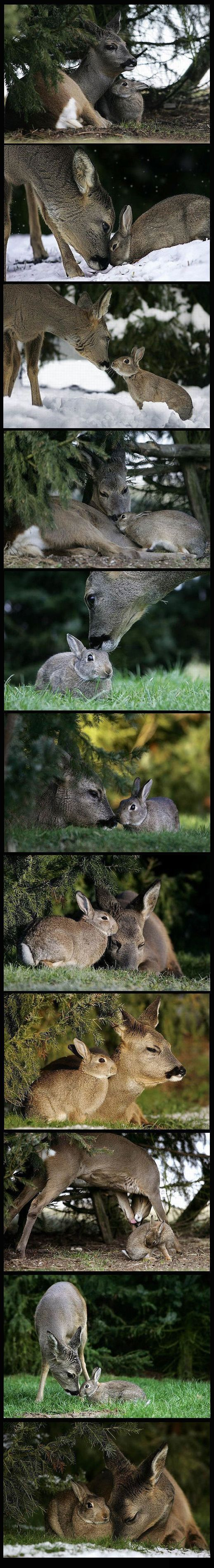 Wild bunny rabbit makes friends with a deer in the woodland forest - animal photography / Bambi and Thumper