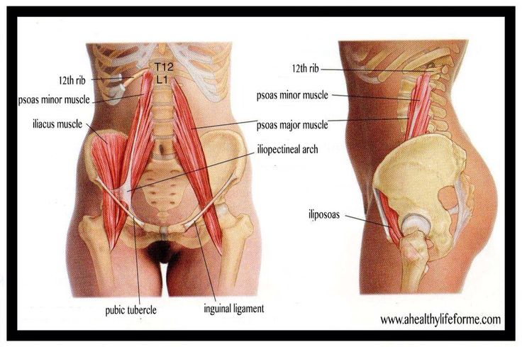 """The term iliopsoas (ilio-so-as) refers to the combination of the psoas major and the iliacus at their inferior ends. These muscles are distinct in the abdomen, but usually indistinguishable in the thigh. As such, they are usually given the common name """"iliopsoas"""" and are referred to as the """"dorsal hip muscles"""" or """"inner hip muscles"""". The psoas minor does not contribute to the iliopsoas muscle."""