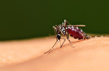 World Malaria Day: How To Avoid Getting The Disease