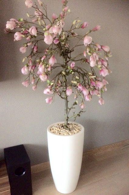Magnolia boom gemaakt op echte fruit tak. Kijk voor meer info op www.annefleurs.nl