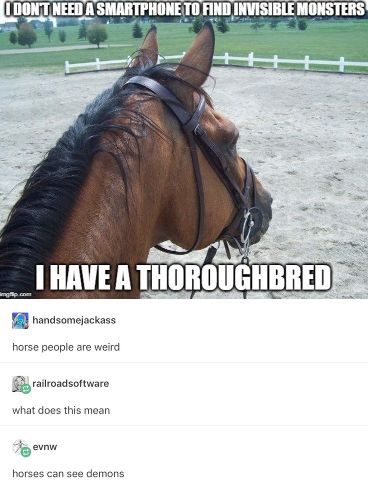 As someone who's ridden a thoroughbred before, I can understand this. Yep, horse people are weird! 0~0