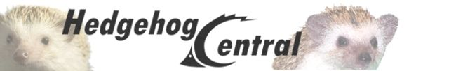 Hedgehog Central - your one-stop source for quality hedgehog information