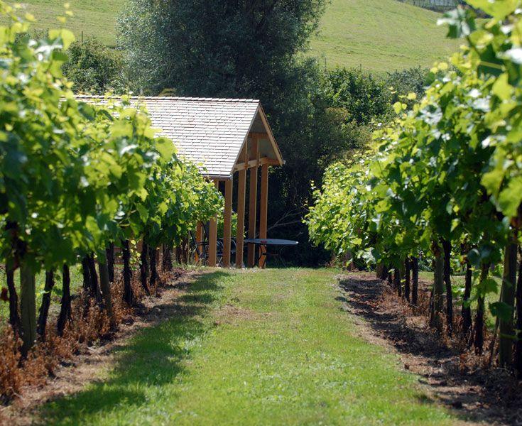 Vineyard in full bloom. Three Choirs Vineyard, Gloucestershire