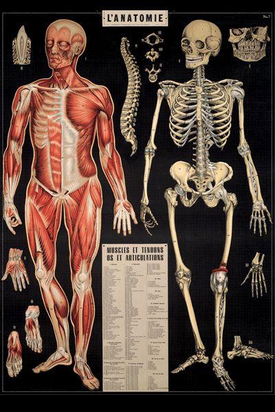 Junkfunk - #VINTAGE RE-PRINT #ANATOMY BODY  #PRINT #POSTER, £3.95 (http://www.junkfunk.com/products/cavallini-anatomy-print.html)