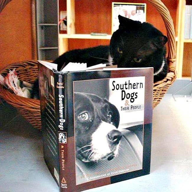 Bir Gezginin Kedi Günlüğü ile Tanışmaya Hazır Mısınız: 'Travelling Cats' Sanatlı Bi Blog 25