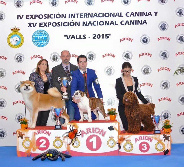 IDS Valls Spain on 25.10.2015. my choice at BIS best puppy