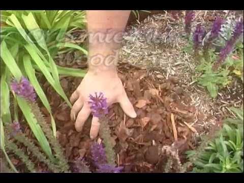 Gardening In Kentucky Mulching