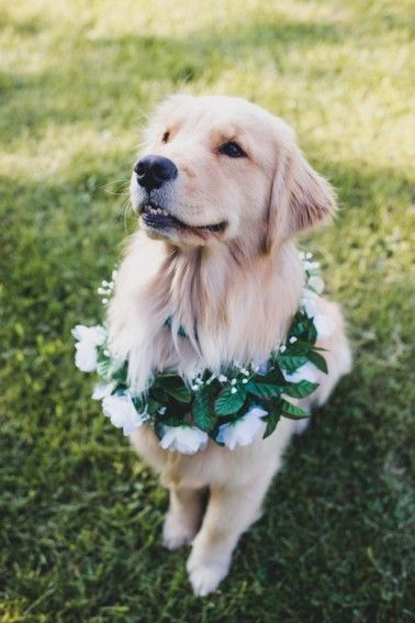Dogs wearing floral crowns at weddings always steal the show! | Tiffany Medrano…
