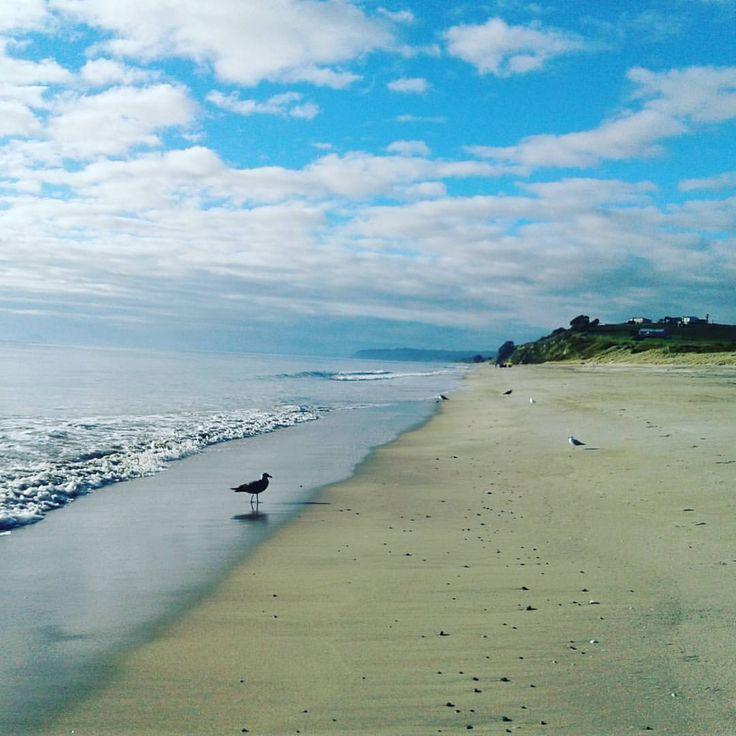 Pukehina beach this morning. #katrinadunn #harcourts #pukehina #beach #morning #realestate #appraisal #buying #selling #property #getsold #houses #tauranga #bayofplenty