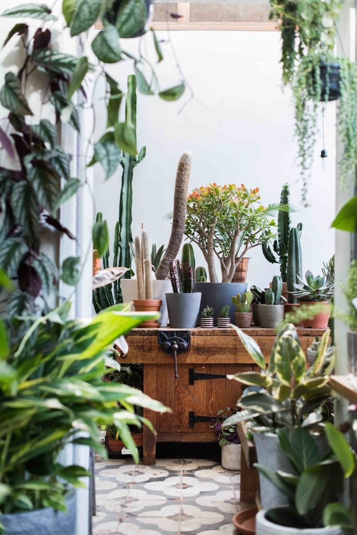 304 best botanicals images on pinterest plants house plants and
