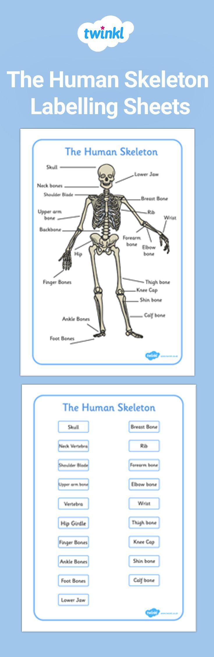 Kostenlose Beschriftungsbogen Fur Das Menschliche Skelett Beschriftungsbogen Das Fur H [ 2250 x 735 Pixel ]