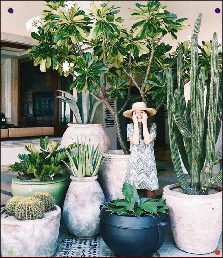 Cornered by a horde of subtropical plants! Agaves, columnar prickly plant and ba…