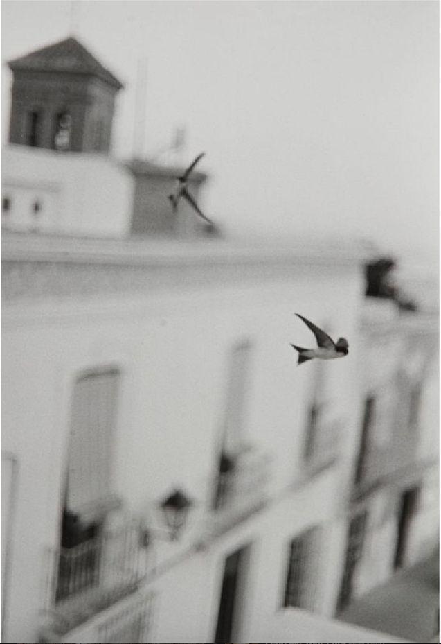 gacougnol: BERNARD PLOSSUAndalusian Swallows c. 1990.