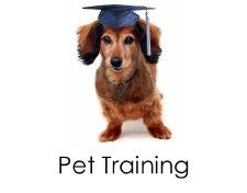 We do everything at See Spot Spoiled...including Pet Training!!