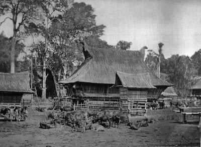 Ternak di Desa Sibraija | Runderen in het Karo Batak dorp Sibraija | 1870