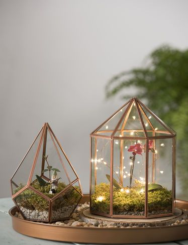 Love this starry night orchid in a terrarium look.  The baby orchid is just too cute
